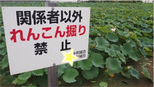 f:id:kazumi-amitie:20160915000059j:image