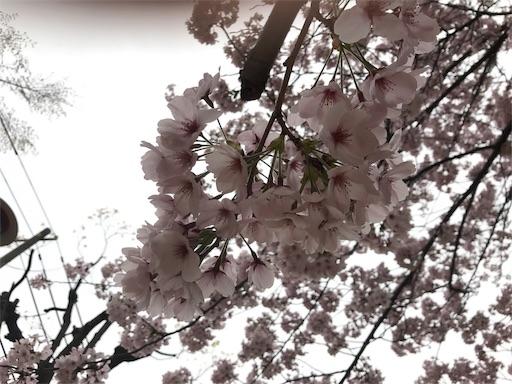f:id:kazumi-amitie:20170411014349j:image
