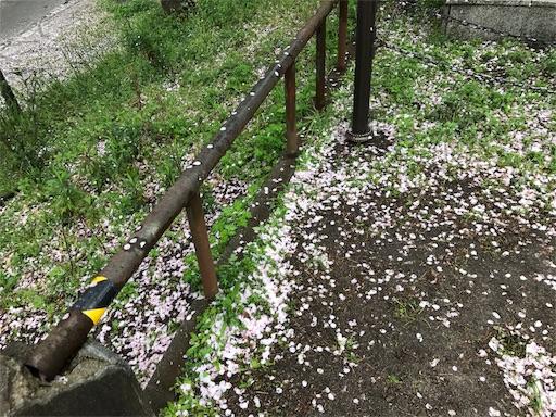 f:id:kazumi-amitie:20170412001439j:image