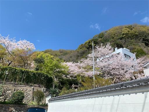 f:id:kazumi-amitie:20200406011939j:image