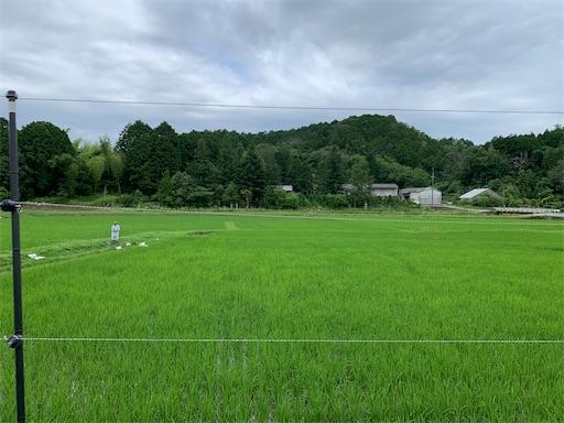 f:id:kazumi-amitie:20200702012618j:image