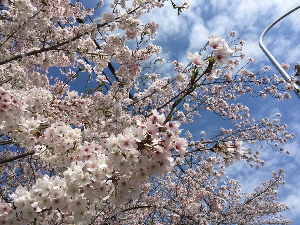 f:id:kazunablog:20170413224534j:image