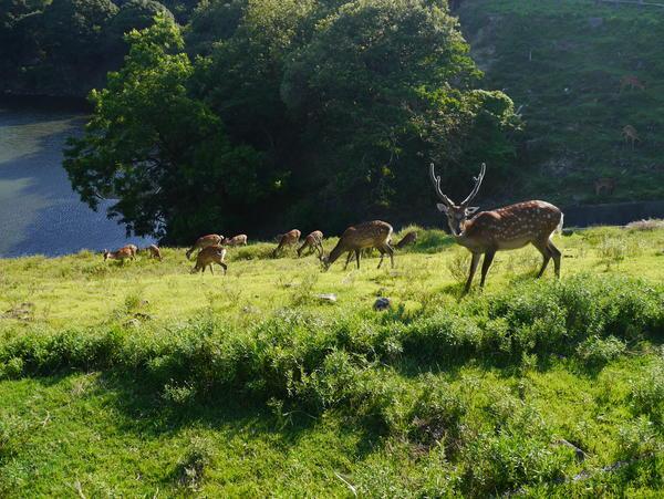 鹿の群れ 広大な敷地