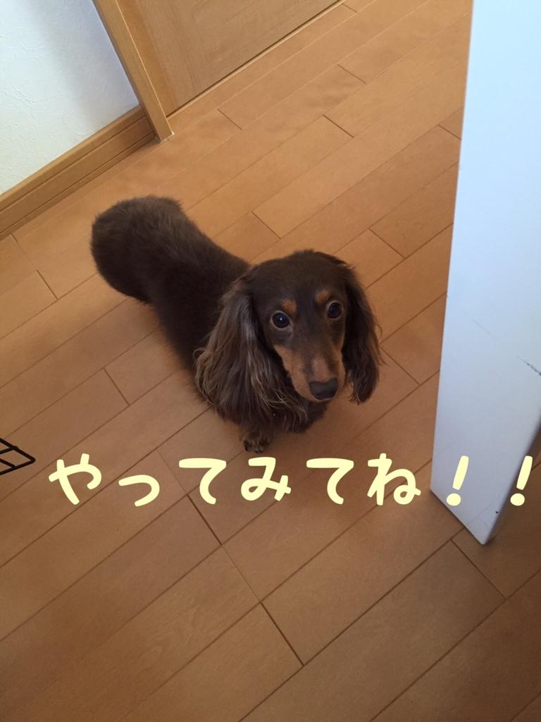f:id:kazupi421:20161109210137j:plain