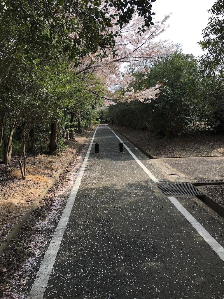 f:id:kazupu-san:20200413203646j:image