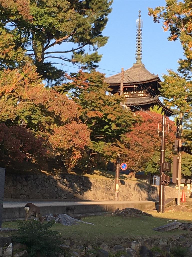 f:id:kazupu-san:20201107101818j:image
