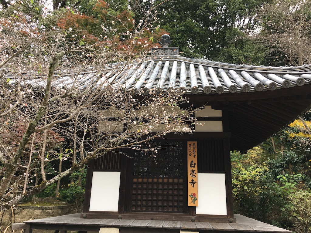 f:id:kazupu-san:20201207160654j:image