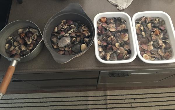 潮干狩りで取れた貝