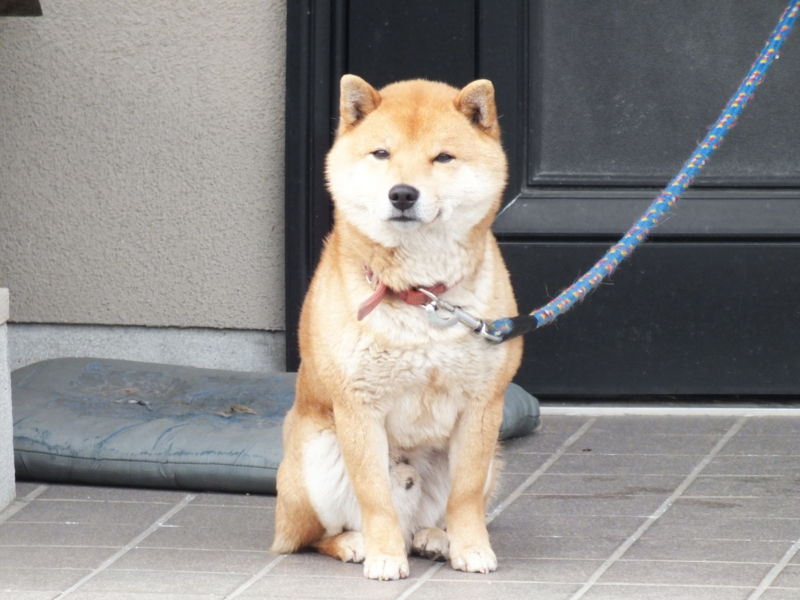 f:id:kazuyo1014:20120321001112j:image
