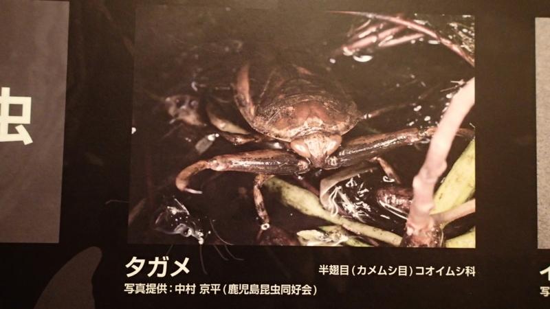 f:id:kazuyo1014:20150927063754j:image