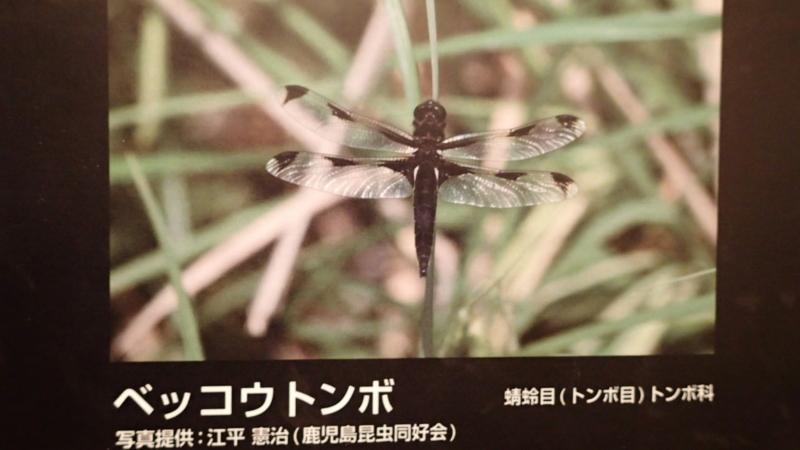 f:id:kazuyo1014:20150927064014j:image