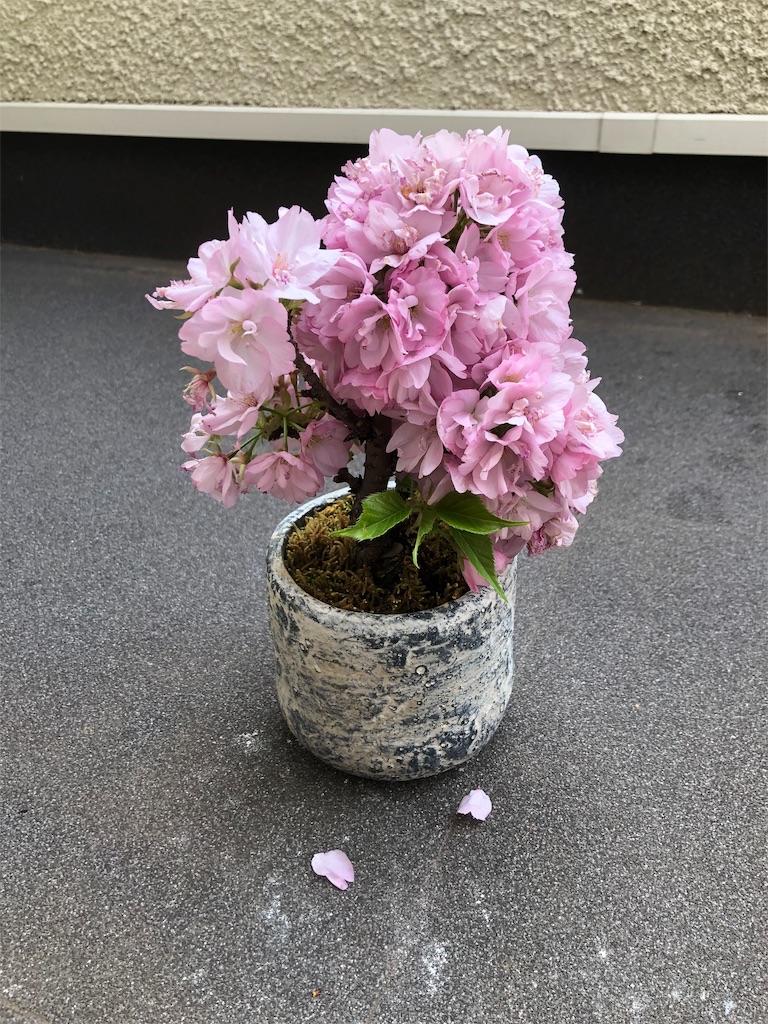 f:id:kazuyoshisan:20190412000013j:image
