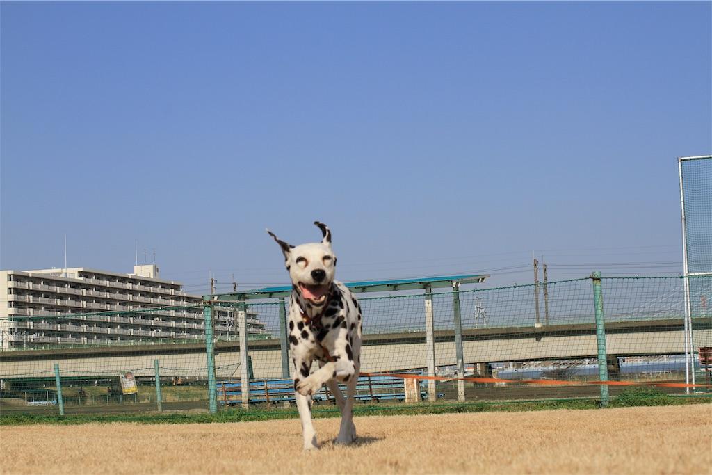 f:id:kazz-matsumura:20190530120740j:image