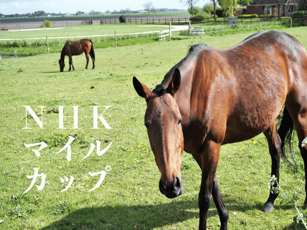 NHKマイルカップ_ナビ男の競馬録