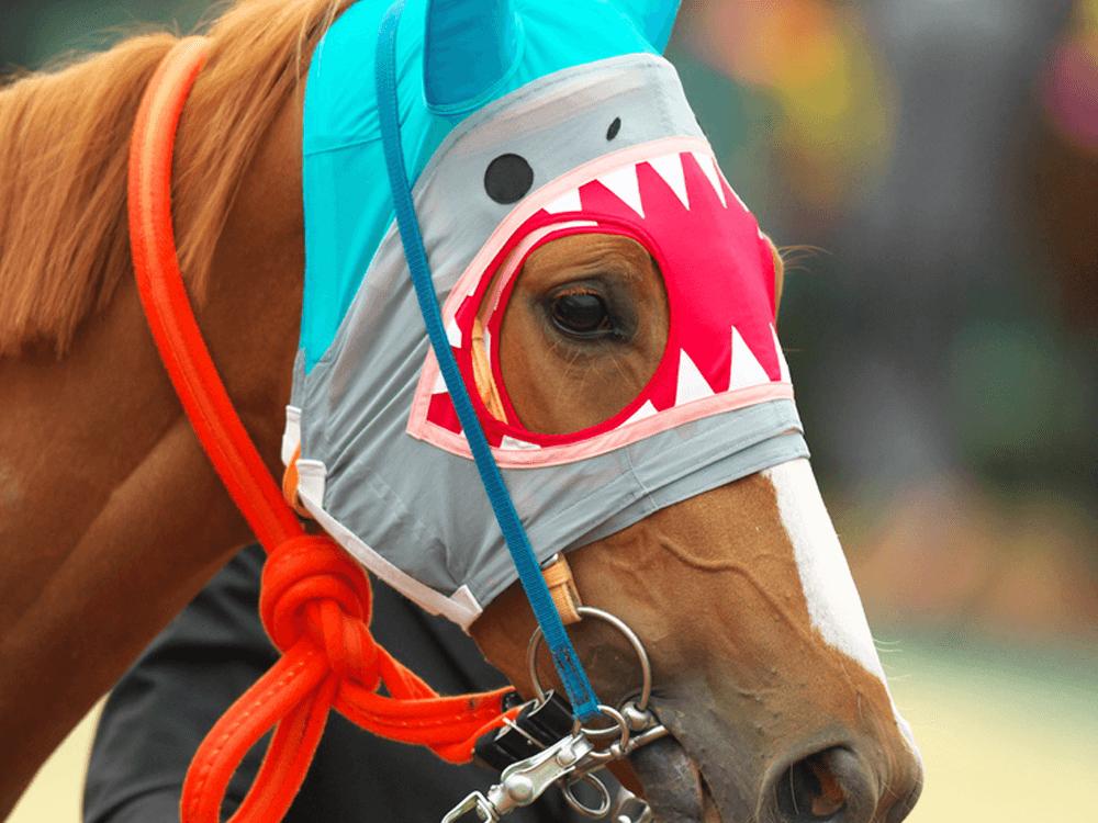 シャークファング_競馬