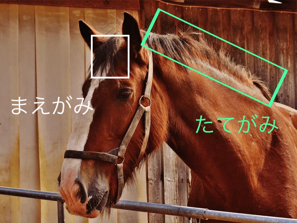 馬の毛_ナビ男の競馬録