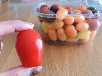5種類のトマト