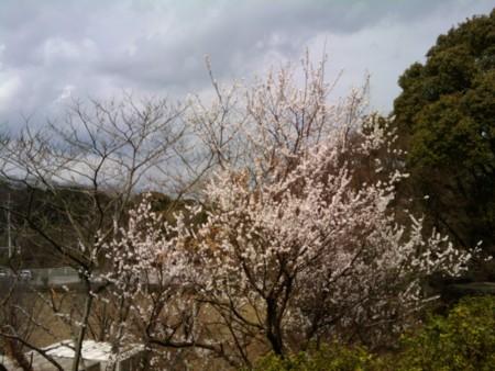 f:id:ke_takahashi:20110314131003j:image