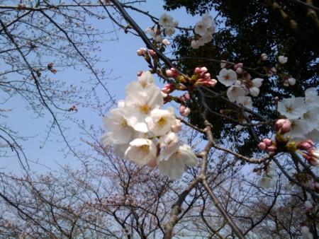 f:id:ke_takahashi:20110331105607j:image