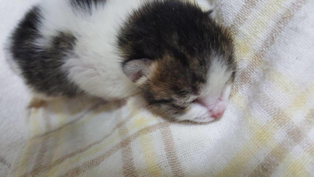 生後1週間の猫様