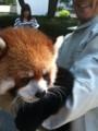 [レッサーパンダ][旅行][茶臼山動物園]