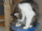 [ハローアニマル][ネコ]