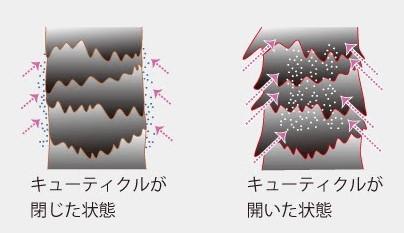f:id:kei79:20210326165407j:plain