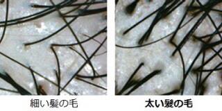 f:id:kei79:20210415131750j:plain