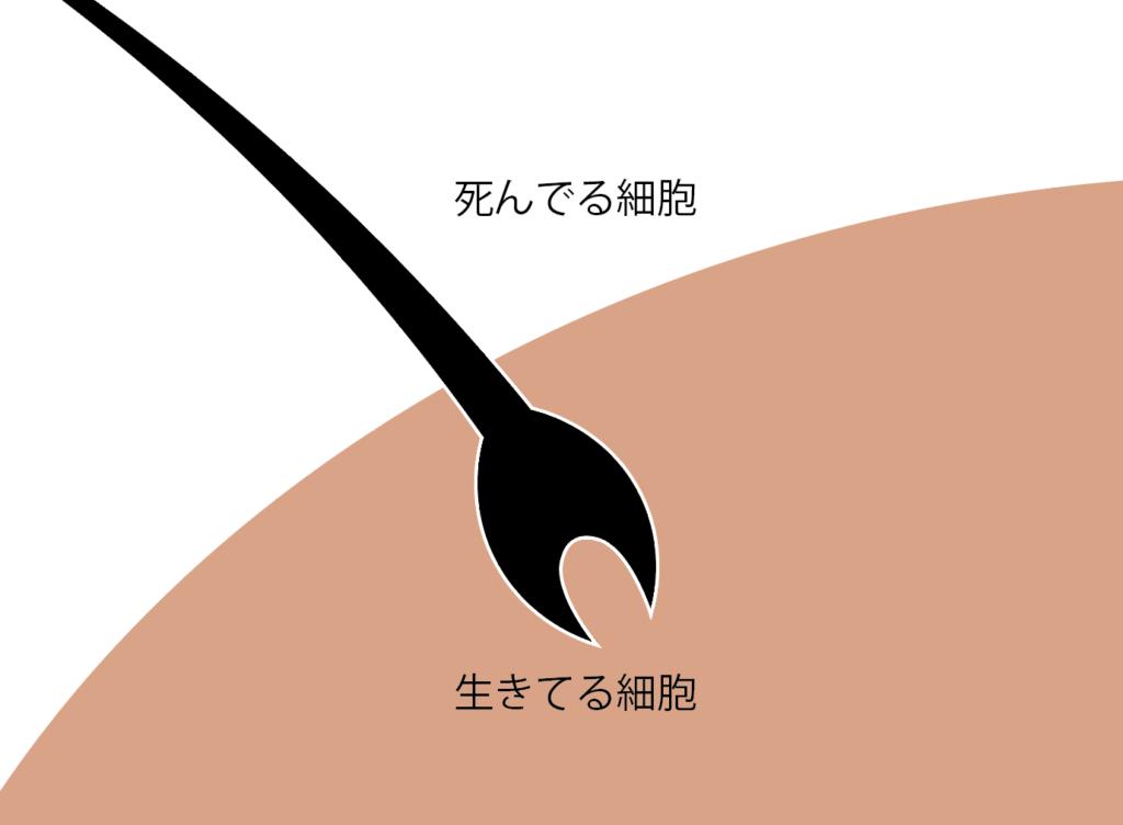 f:id:kei79:20210801093507p:plain