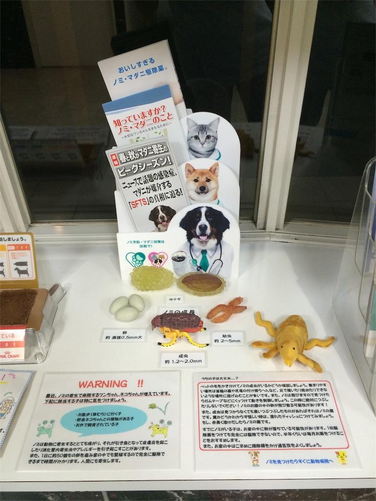 f:id:keiai-animalhospital:20161012204713j:image