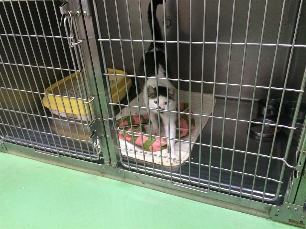 f:id:keiai-animalhospital:20161114183821j:image