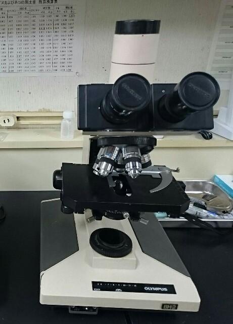 f:id:keiai-animalhospital:20170126174234j:plain