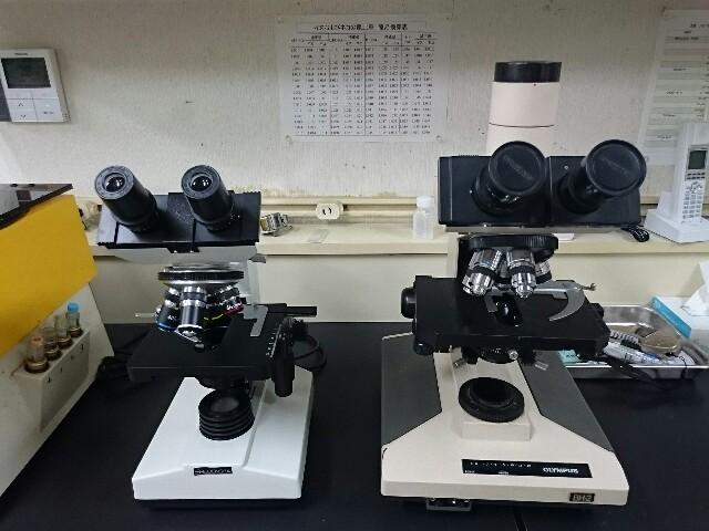 f:id:keiai-animalhospital:20170126174446j:plain