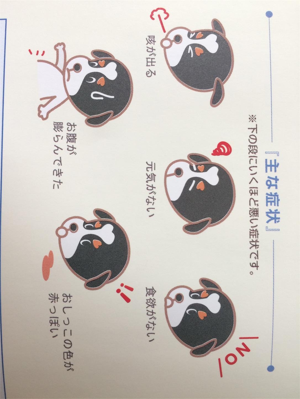 f:id:keiai-animalhospital:20170509114940j:image