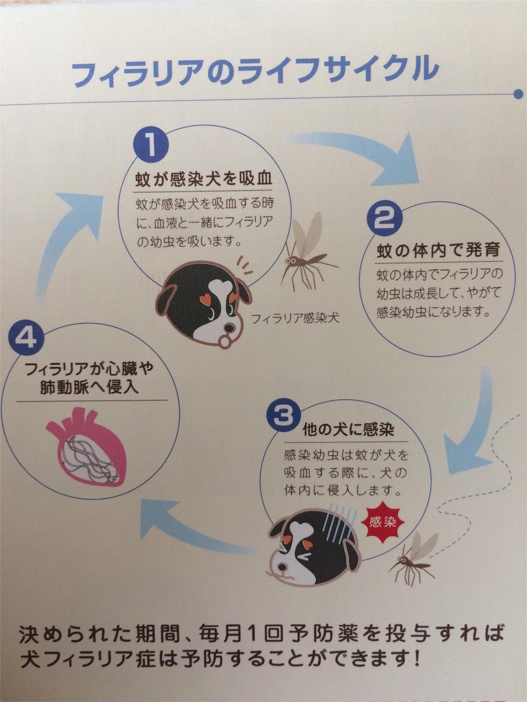 f:id:keiai-animalhospital:20170509115115j:image