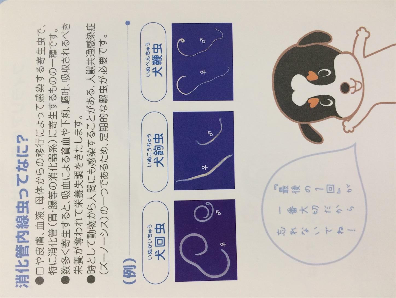 f:id:keiai-animalhospital:20170509162337j:image