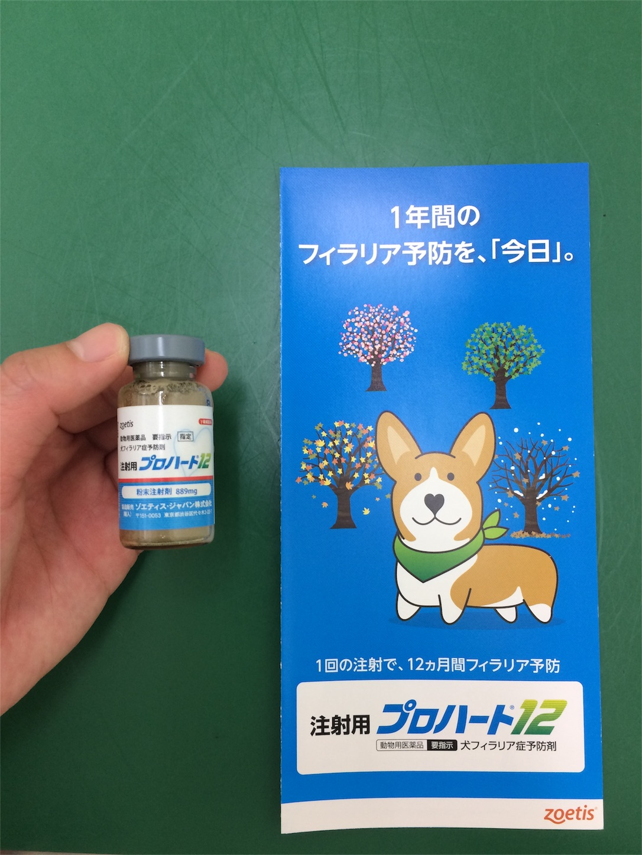 f:id:keiai-animalhospital:20170509170841j:image