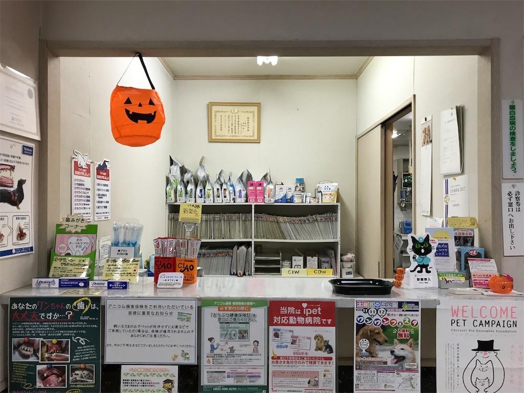 f:id:keiai-animalhospital:20171019174325j:image