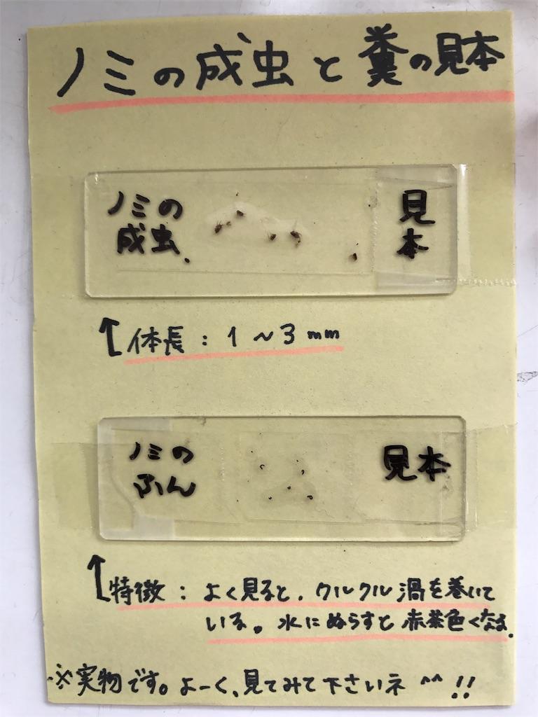 f:id:keiai-animalhospital:20180514165045j:image