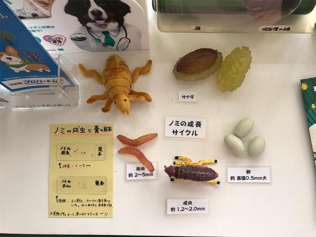 f:id:keiai-animalhospital:20180514165149j:image