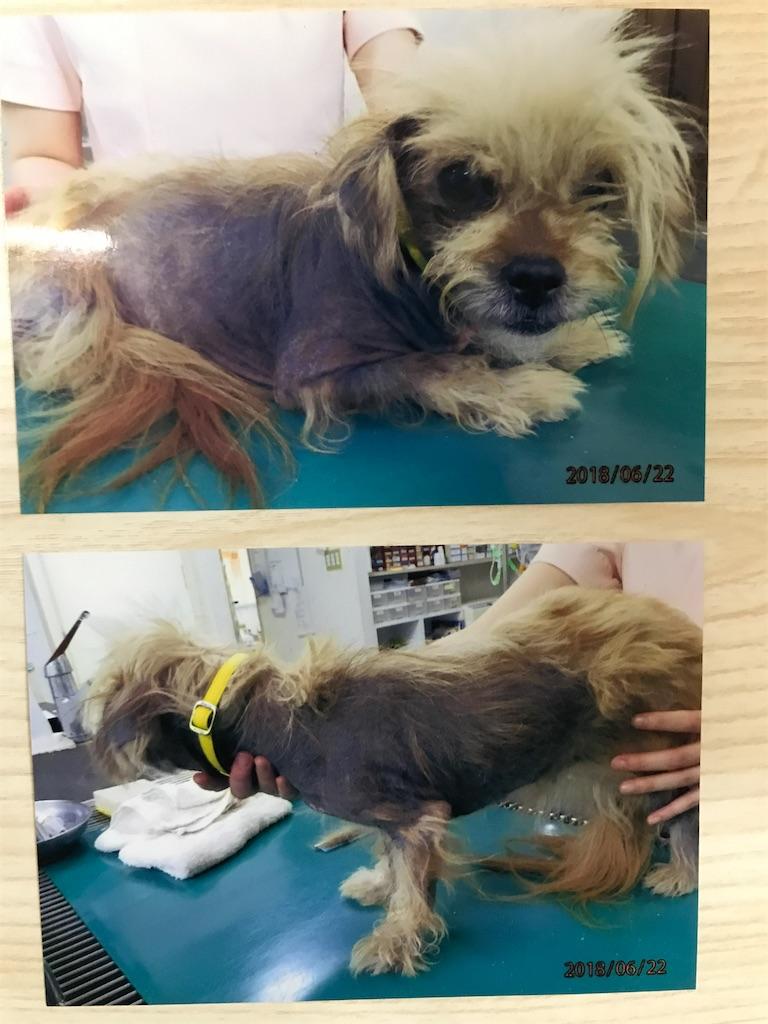 f:id:keiai-animalhospital:20180808181953j:image