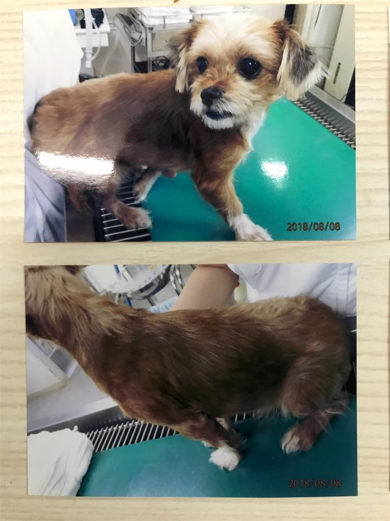 f:id:keiai-animalhospital:20180808182006j:image