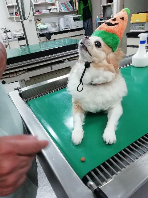 f:id:keiai-animalhospital:20181007102721j:image