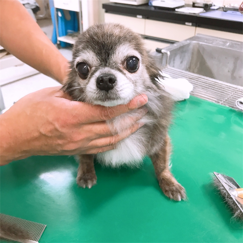 f:id:keiai-animalhospital:20190304185612j:image