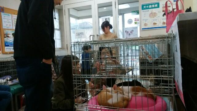 f:id:keiai-animalhospital:20190406191926j:image