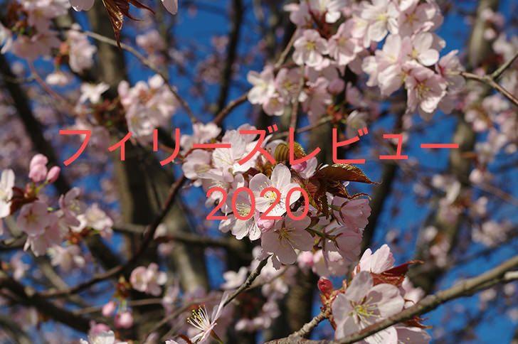 桜花賞の前哨戦をイメージした、桜の花びらの写真