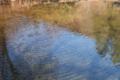 [マス池][ニジマス][虹鱒][養魚場][生け簀]マス池