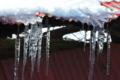 [ツララ][氷柱][雪解け][トタン屋根][農具小屋]ツララ