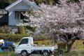 [桜][軽トラック][軽トラ][山里][蔵]桜