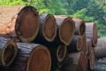 [伐採木][杉][スギ][林業][伐採現場]伐採木